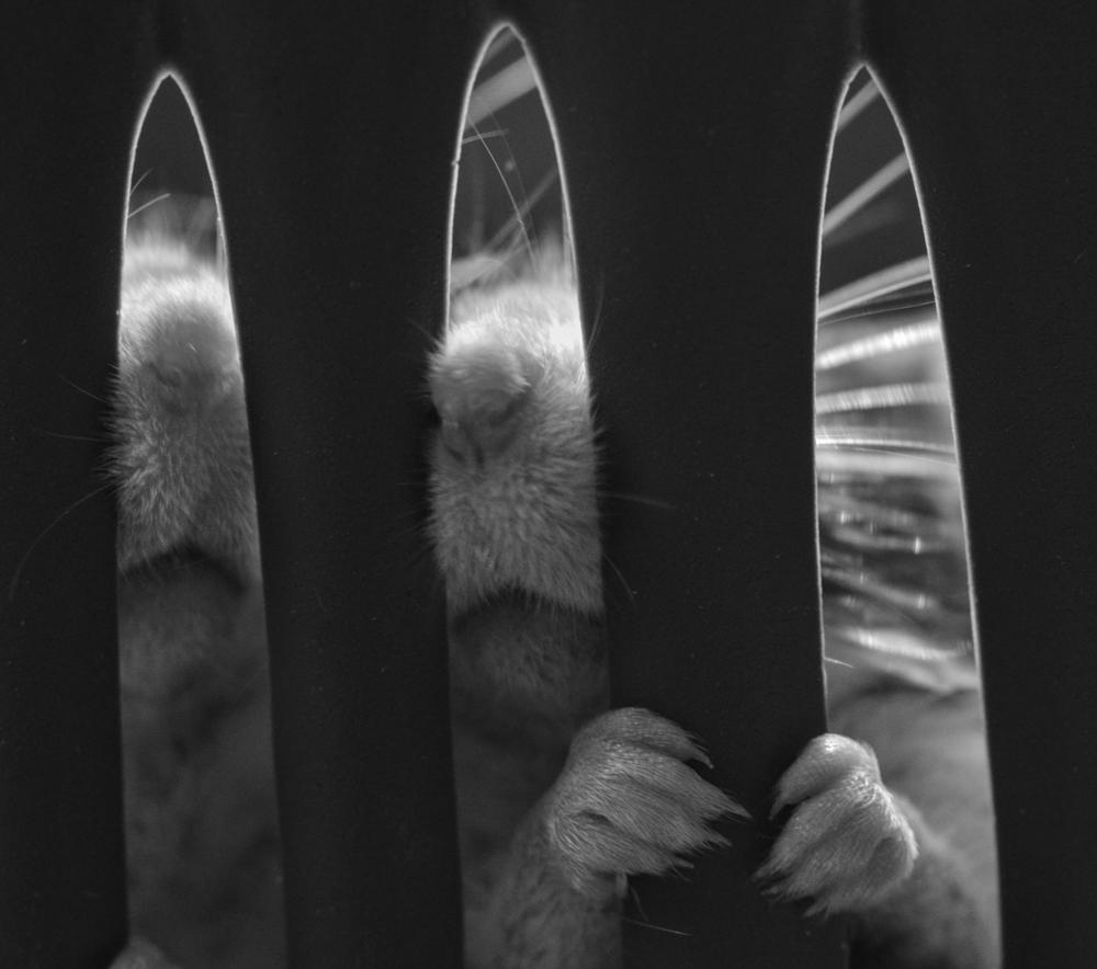 Mäuseschnautzen hinter Gitter - Haustierfotografie