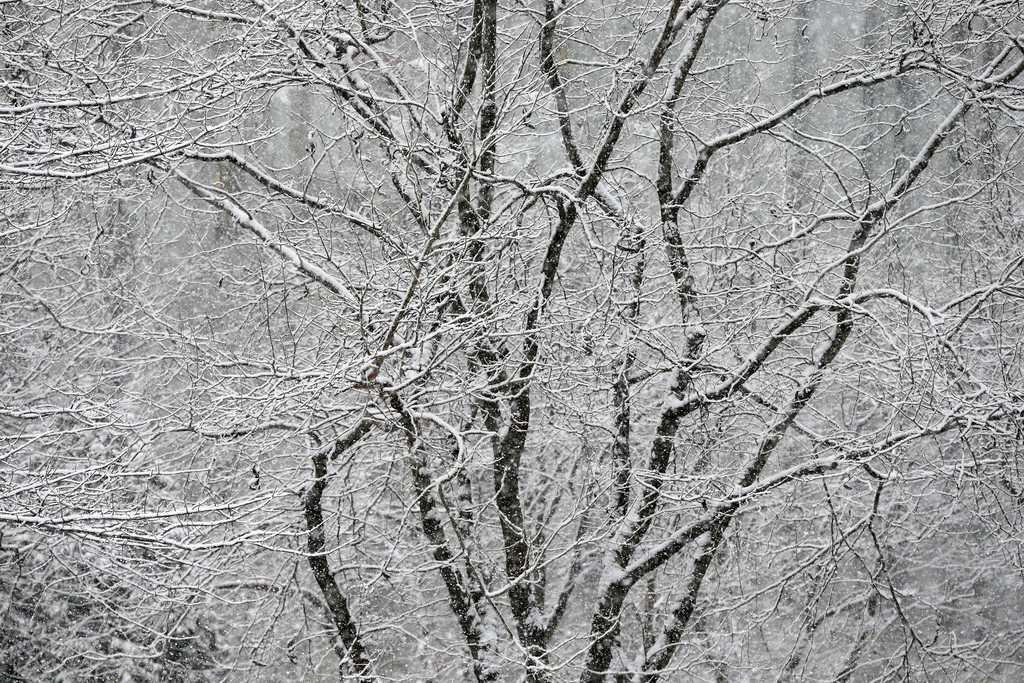 Grafischer Baum mit Schnee in Boston, USA (Keystone/AP Photo/Michael Dwyer)