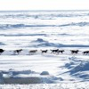 Hunderennen auf der Bering See (Keystone/AP Photo/Mark Thiessen)