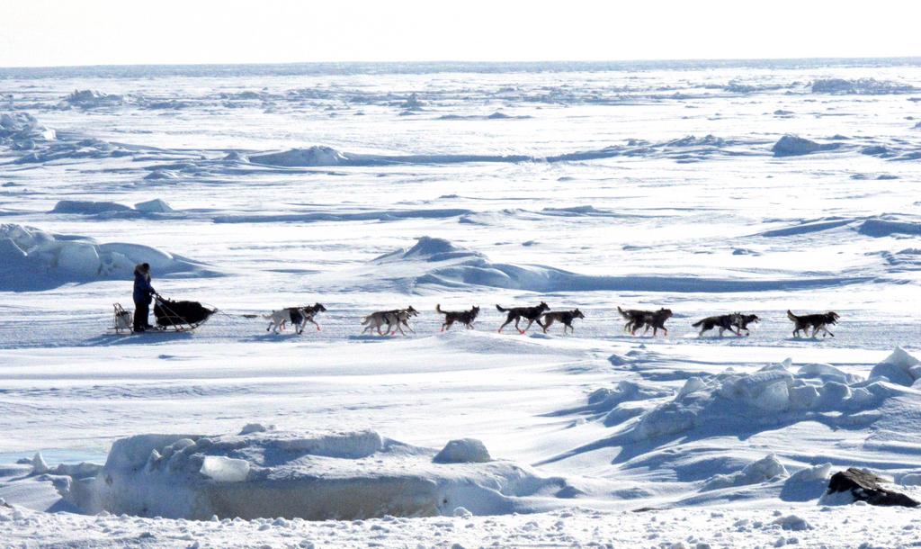 Hunderennen auf der Bering See (Keystone/AP Photo/Mark Thiessen)