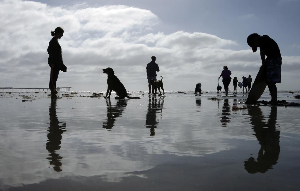 Hunde und Hundebesitzer am Strand von San Diego, USA (Keystone/AP Photo/Gregory Bull)