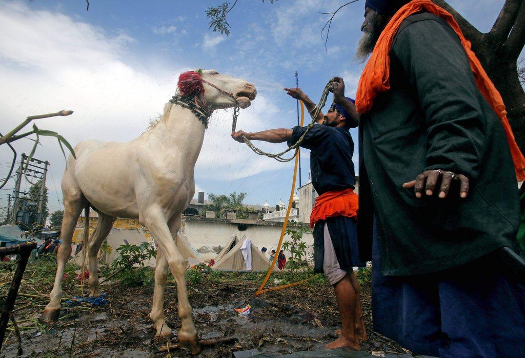 Pferdewäsche bei den Sikh-Reitern, Anandpur Saheb, Punjab, Indien, EPA/MONEY SHARMA