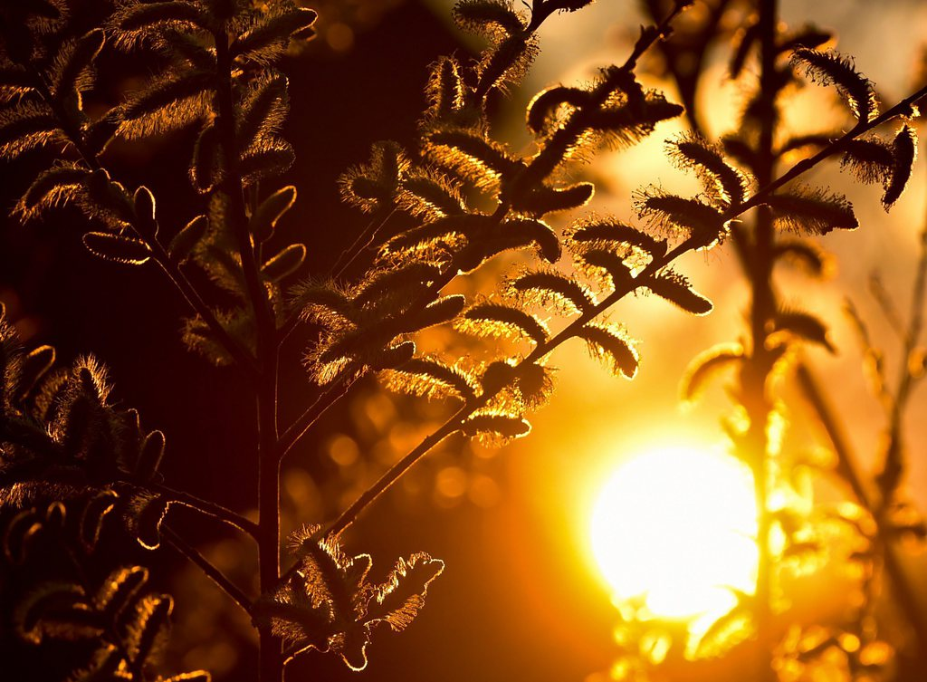 Sonnenuntergang in Sieversdorf, Deutschland (Keystone/EPA/Patrick Pleul)