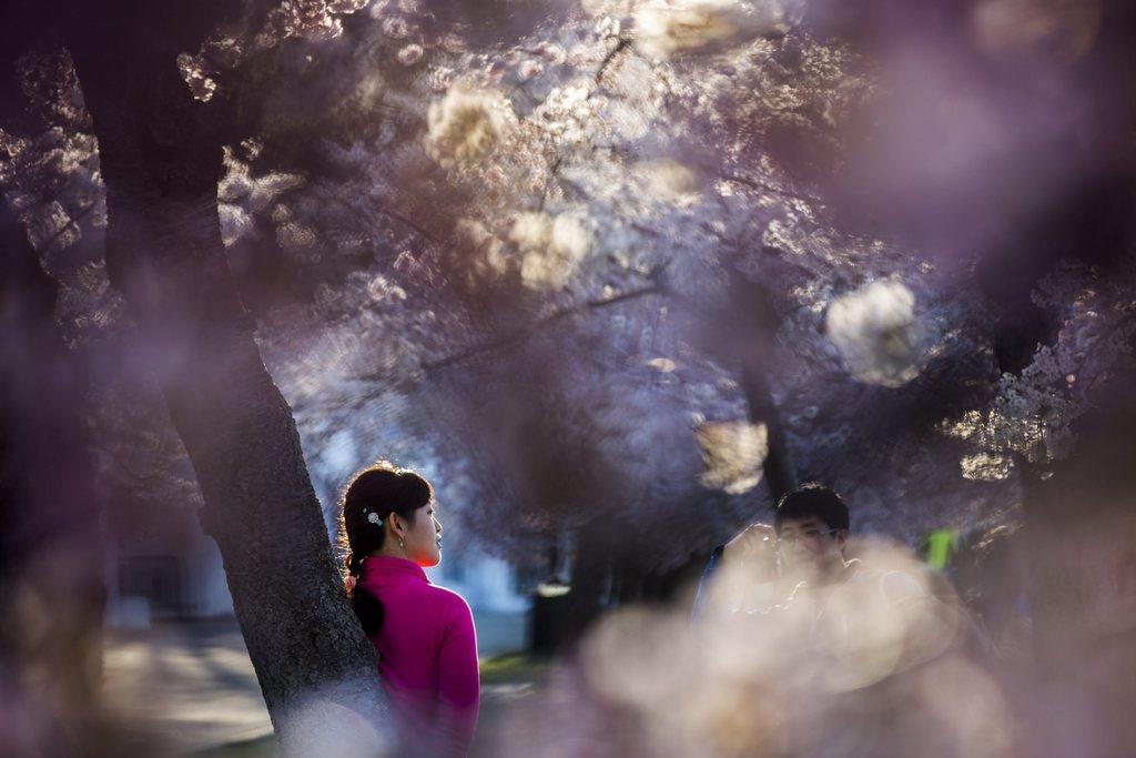 Kirschblüte in Washington, USA (Keystone/EPA/Jim Lo Scalzo)