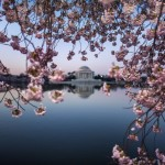 Kirschblüte in Washington, USA (Keystone/EPA/Jim Lo Scalzo)