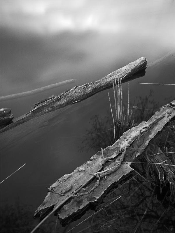 Abb. 7: Uferpartie am Aalkistensee (Eigenes Portfolio, Region 2010)