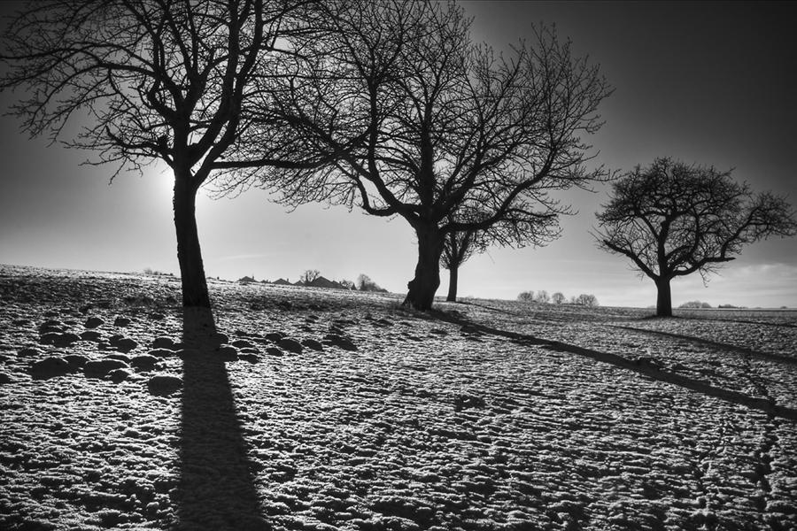 Abb. 15: Bäume im Gegenlicht (Eigenes Portfolio, Region 2009)