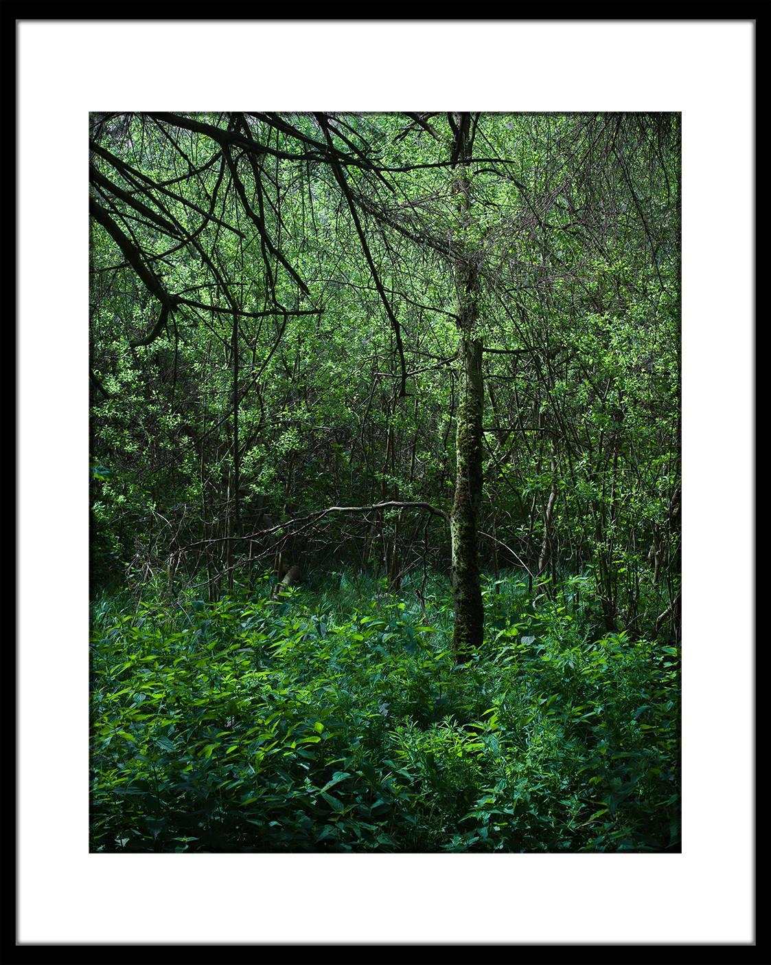 Leserfoto: Der Urwald vor der Haustür