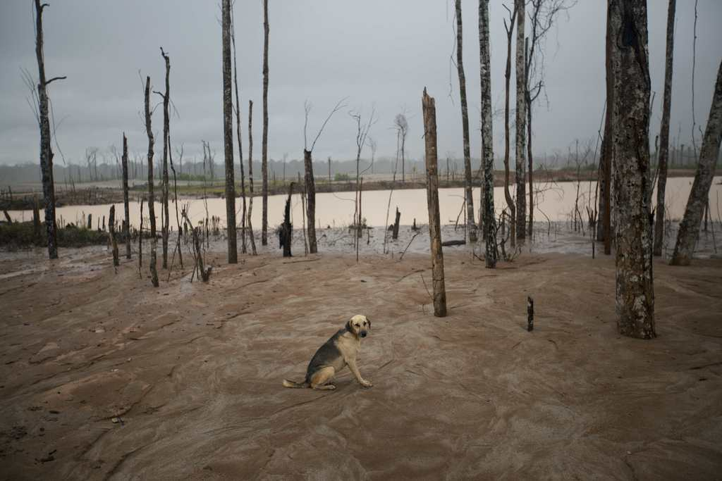 Hund in einer durch den Goldabbau zerstörten Landschaft, Madre de Dios, Peru (AP Photo/Rodrigo Abd)