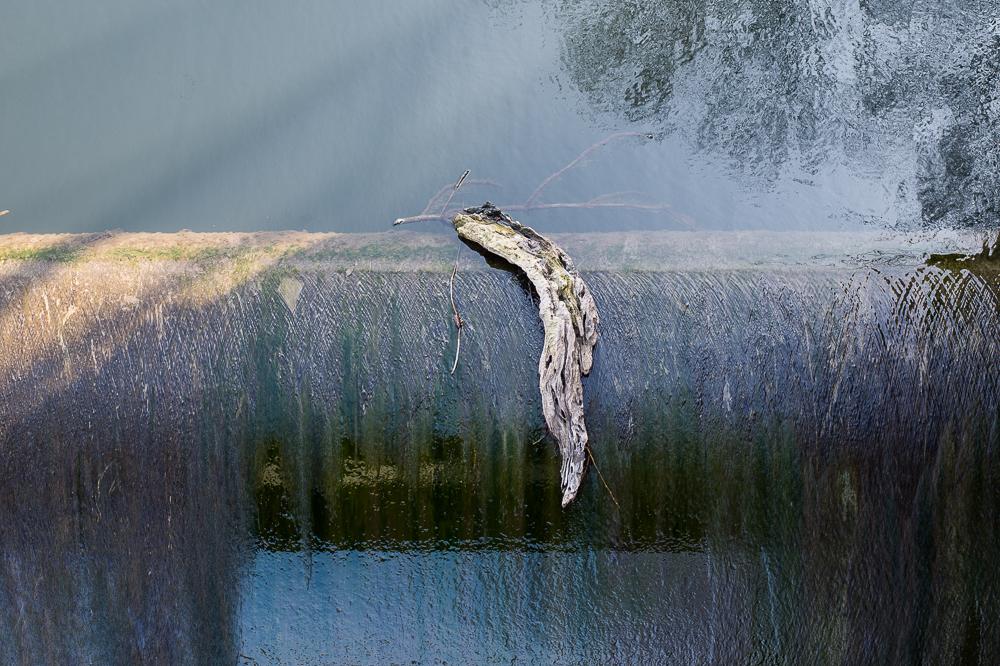 "Leserfoto - ""Totes Holz"": Natur als Abstrakt"