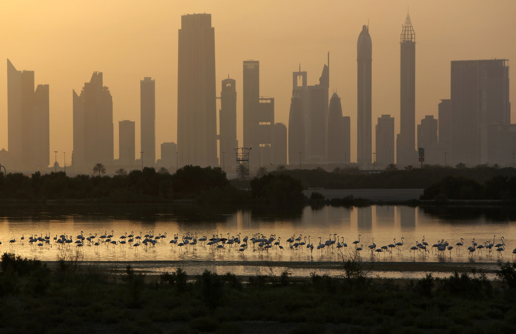 Flamingos am Fluss vor der Skyline von Dubai, VAE (AP Photo/Kamran Jebreili)