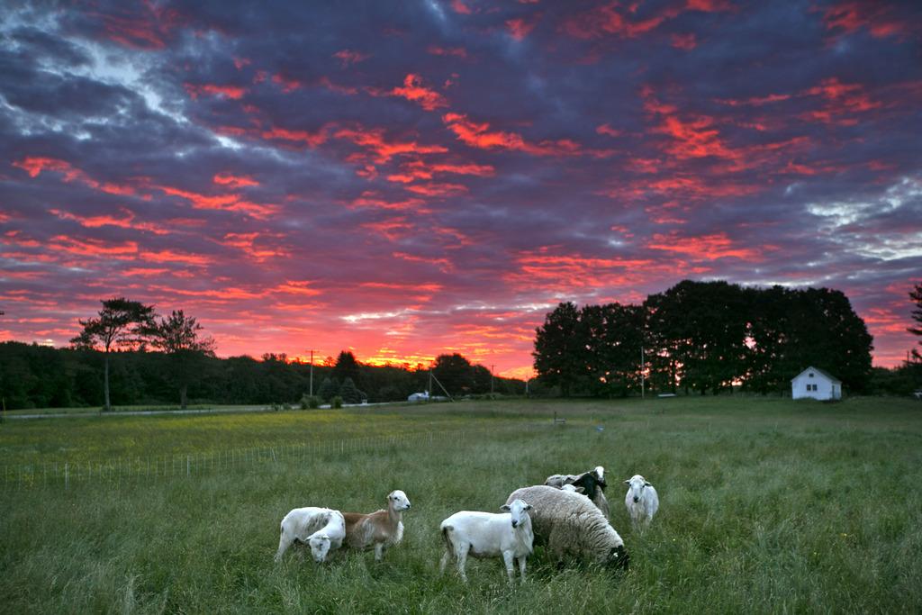 Morgensonne über Brunswick, USA (Keystone/AP Photo/Robert F. Bukaty)