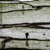 Reisfeld nahe Katmandu, Nepal (AP Photo/Niranjan Shrestha)