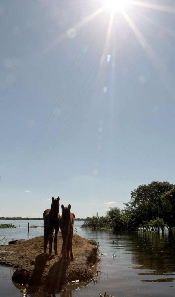 Zwei Pferde im Hochwasser, Asuncion, Paraguay  EPA/ANDRES CRISTALDO