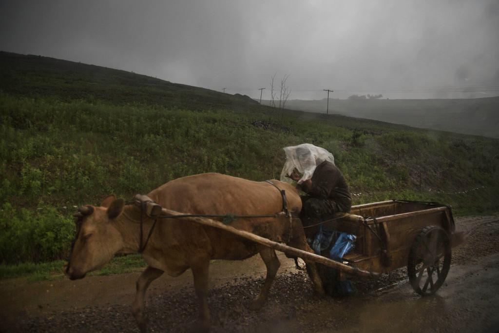 Ochsengespann nahe Hyesan, Nordkorea  (AP Photo/David Guttenfelder)