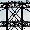 Stare aud der Stange, Jacobsdorf in Brandenburg, D,   EPA/PATRICK PLEUL