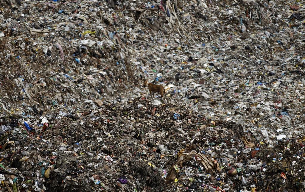 Streunender Hund auf einem Müllplatz außerhalb von Bangalore, Indien  (AP Photo/Aijaz Rahi)