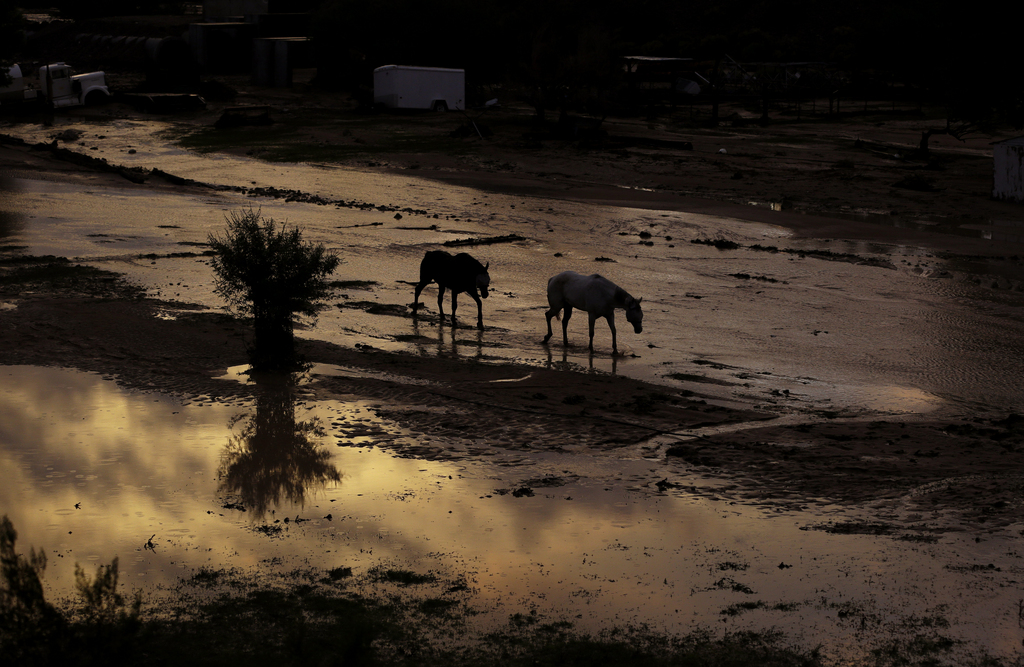 Pferde in einem überfluteten Gelände in der Dämmerung, Moapa, Nev., USA (AP Photo/John Locher)