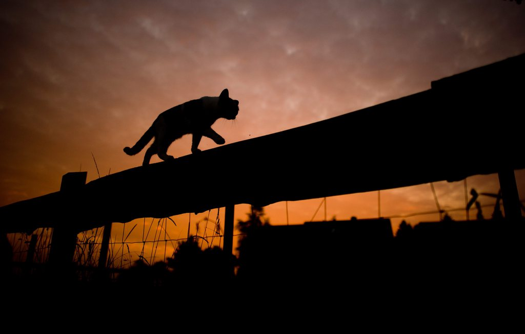 Katze auf dem Zaun bei Sonnenuntergang, nahe Sehnde, D, EPA/JULIAN STRATENSCHULTE