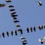 Fotografien aus 24 Stunden: Taubenversammlung