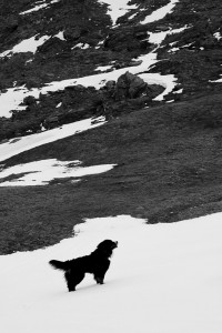 Berghund - (c) Christian Bartusch