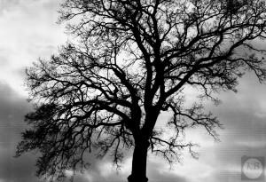 Einsamer Baum - (c) Marcel Dierke