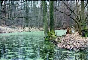 Märchenwald - (c) Marcel Dierke