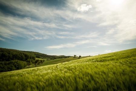Trophäenbild Landschaft