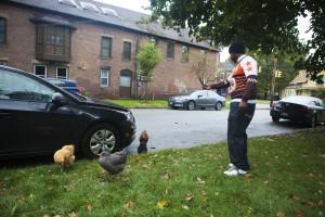 Urbane Hühner
