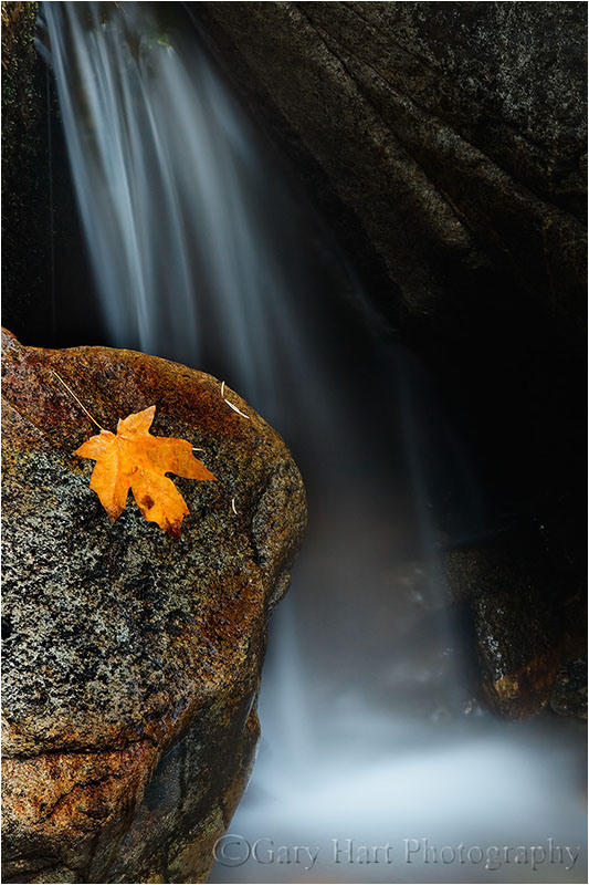 Blatt auf Felsen vor Wasserfall {Gary Hart;http://garyhartblog.com/gallery/dogwood/}