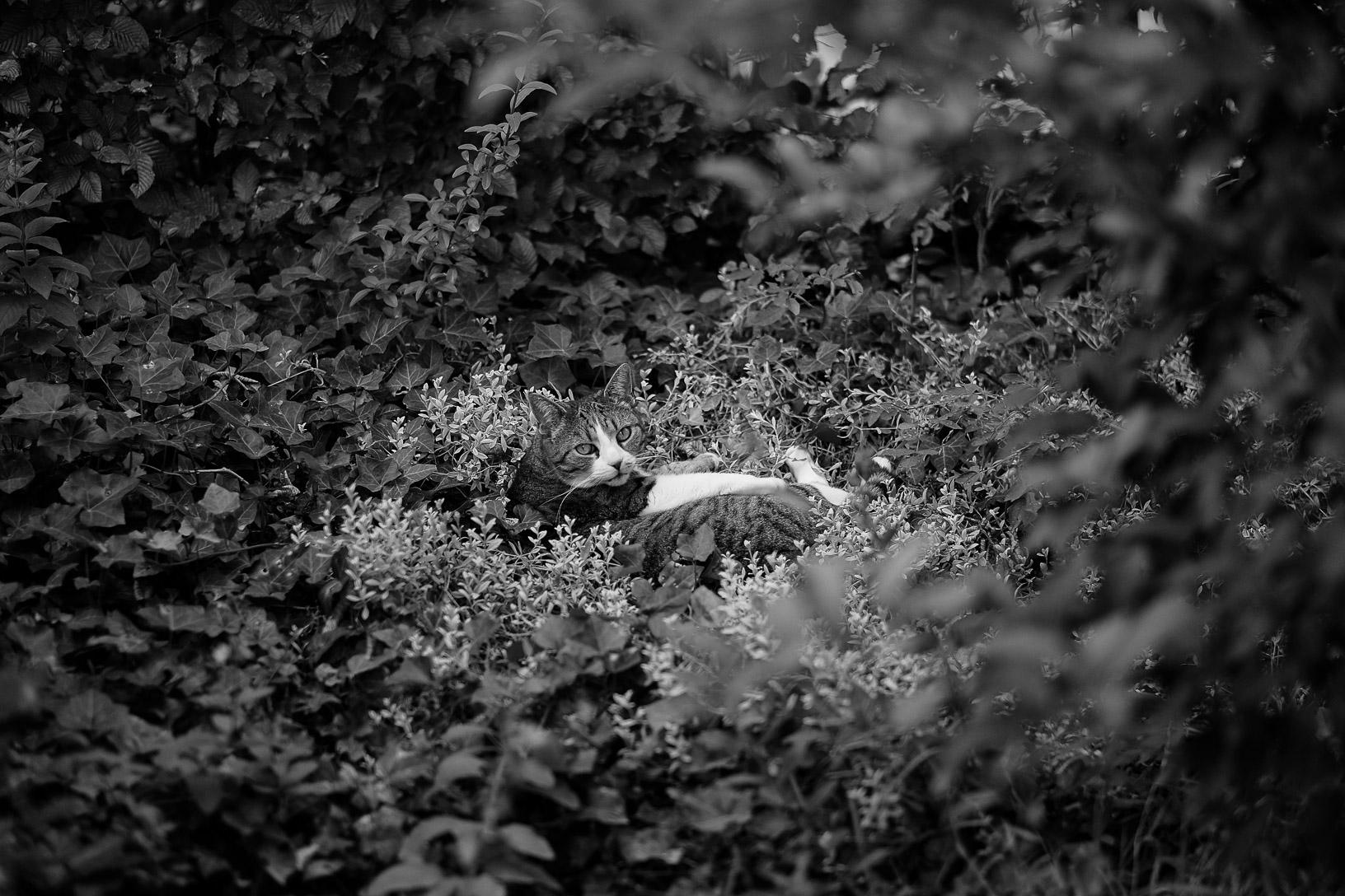 Dieses Bild wirkt nicht so gut in Schwarz-Weiß - (c) Darius Kupczak