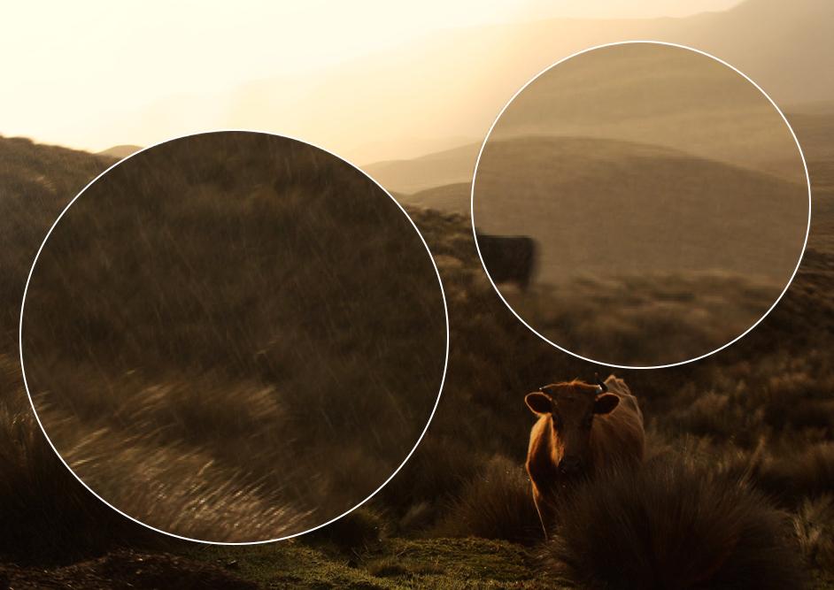 Nieselregen in der Vergrösserung der Kuhbilder