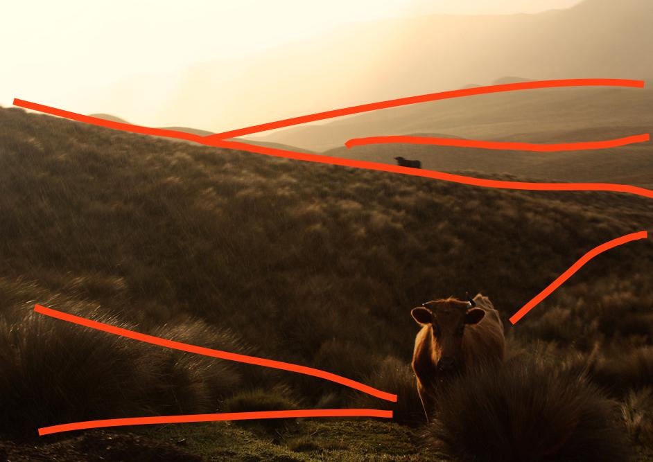 Linien im Kuhbild von Ecuador
