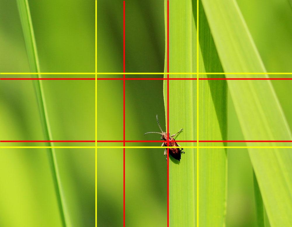 Makrofotografie: Käfer auf Schilfblatt