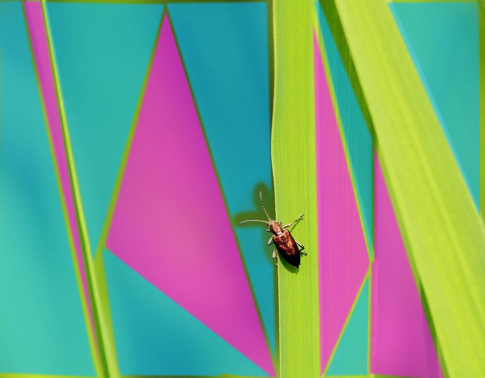 Käferbild: Makrofotografie eines Käfers auf einem Schilfhalm