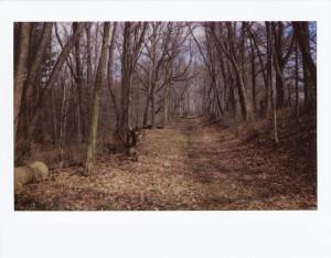 Im Wald (Instax-Aufnahme) - (c) Sofie Dittmann