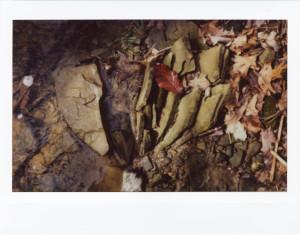 Im Wald (Instax-Aufnahme - (c) Sofie Dittmann)
