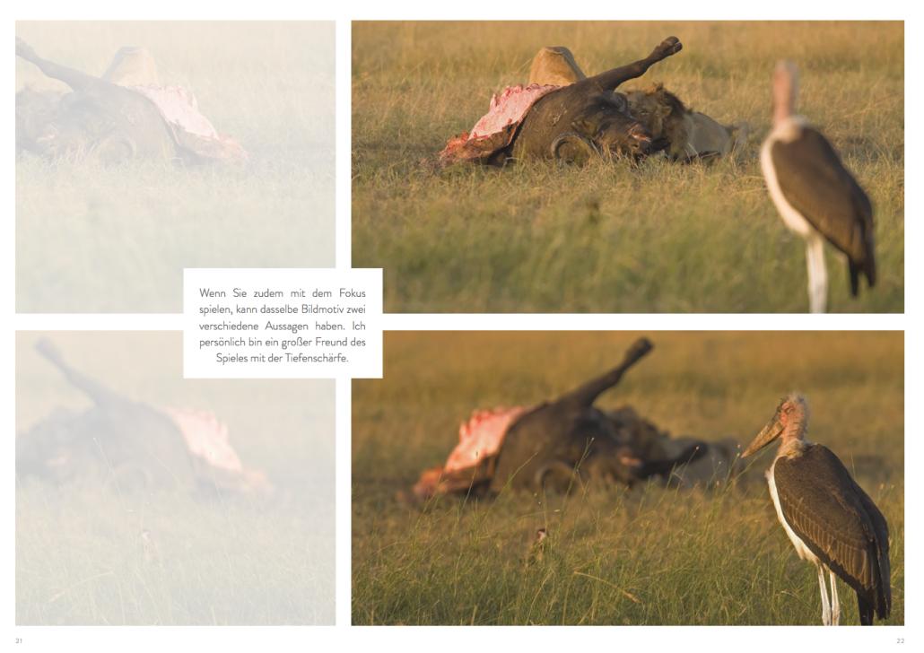 Hinweise zur Gestaltung mit der Blende: Löwe und Beute oder Reiher im Schärfenbereich?