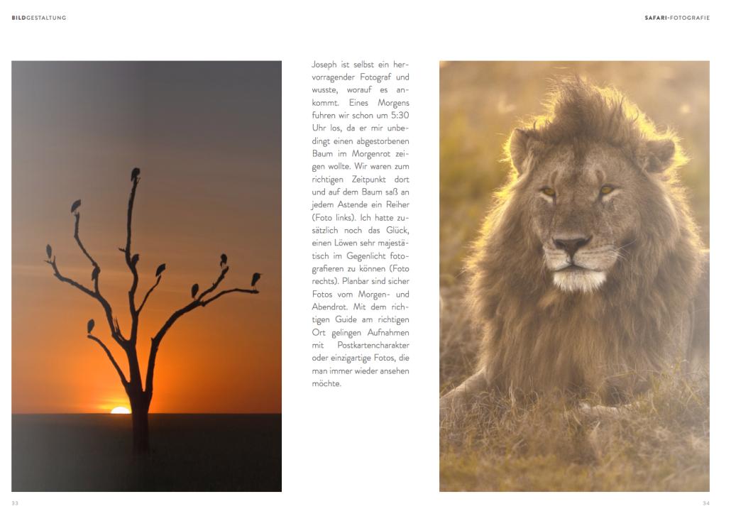 Der Lokale Guide (in diesem Falle ein Massai, der selber ein hervorragender Fotograf ist) weiss, wo die besten Motive sind.