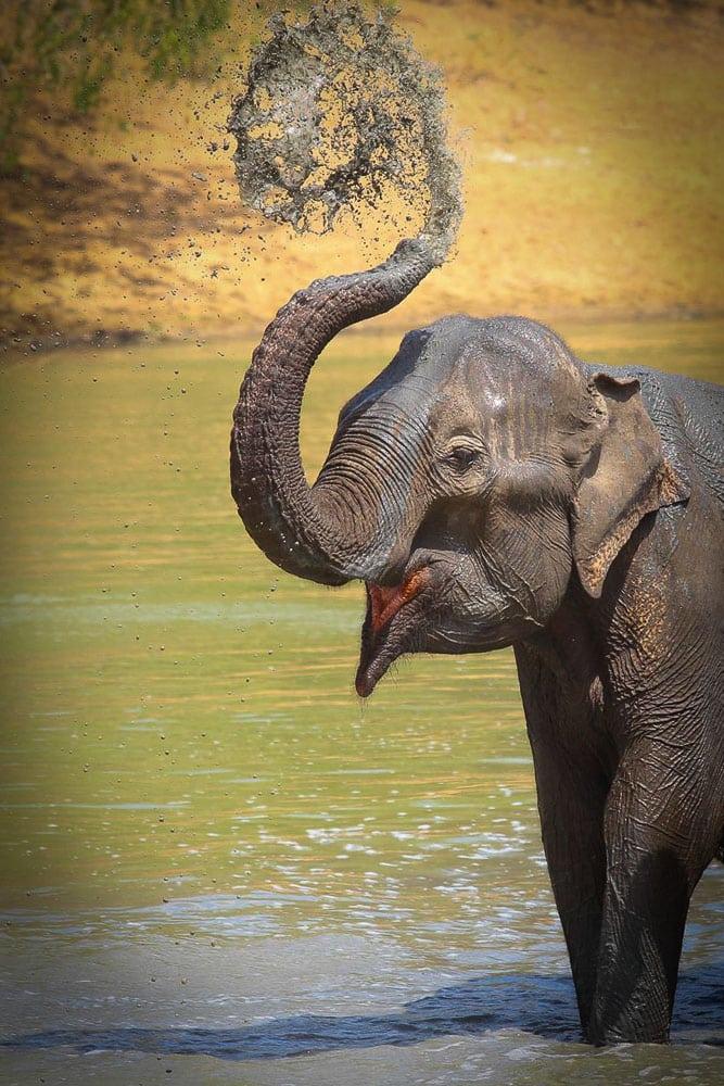 Elefanten-Fotografie mit isoliertem Haupttier