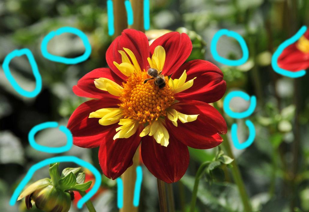 Biene auf Blüte: Problemzonen der Fotografie