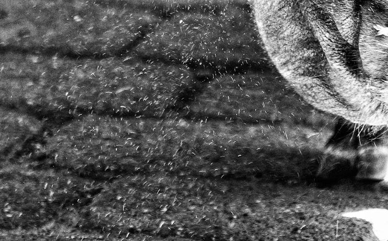 Der Dreck fliegt: Schön eingefangenes Detail im Schatten des Tiers.