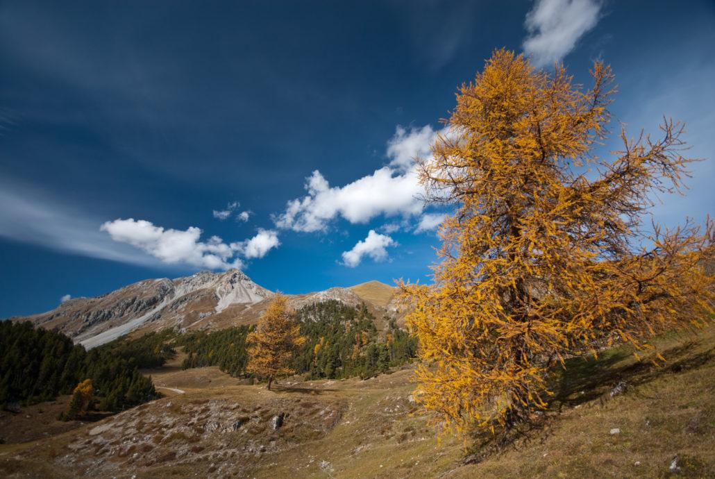 Der Baum ist Motiv und Klammer zwischen Hintergrund und Vordergrund. Er schafft Tiefe.
