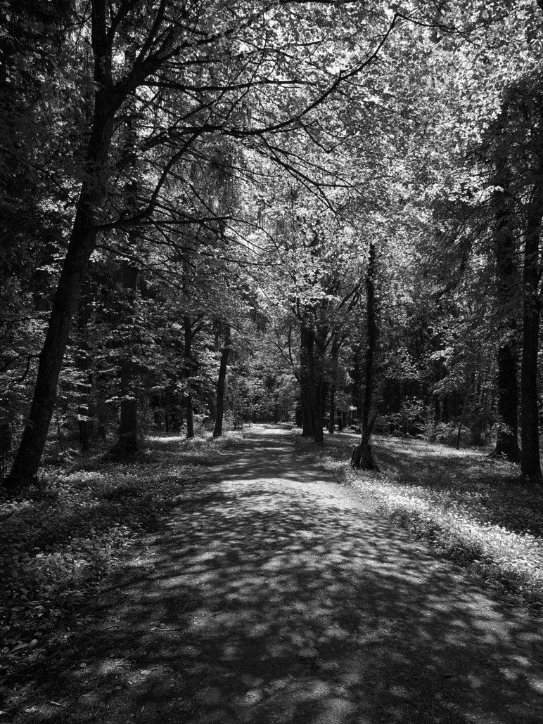 Waldweg in Schwarz-Weiss