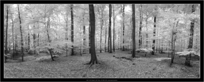 NEX7-IR infrared with Sony 10-18/4 OSS, panorama function