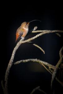 kolibripsdark-1