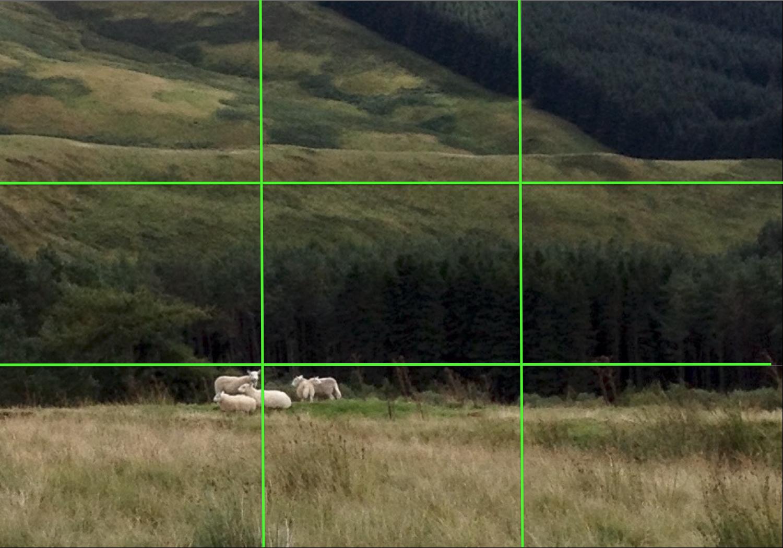 fokussiert.com | Landschaft mit Schafen: Smartphone-Fotoromantik
