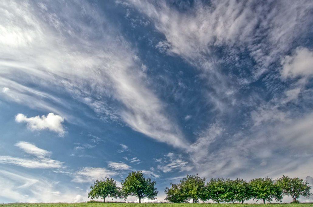 Leicht begradigt und etwas aufgehellte Bäume: Das Ergebnis