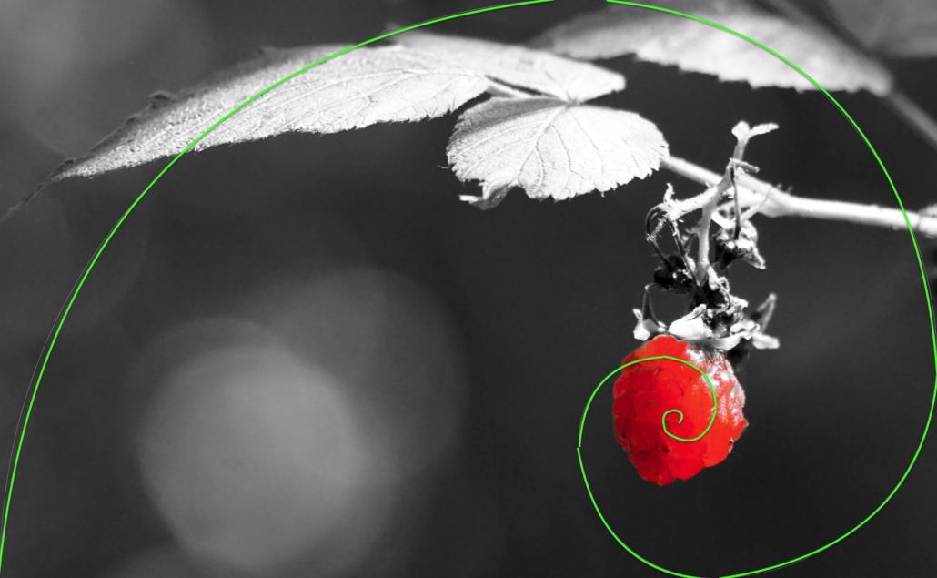 Fibonacci-Spirale in Color-Key-Fotografie