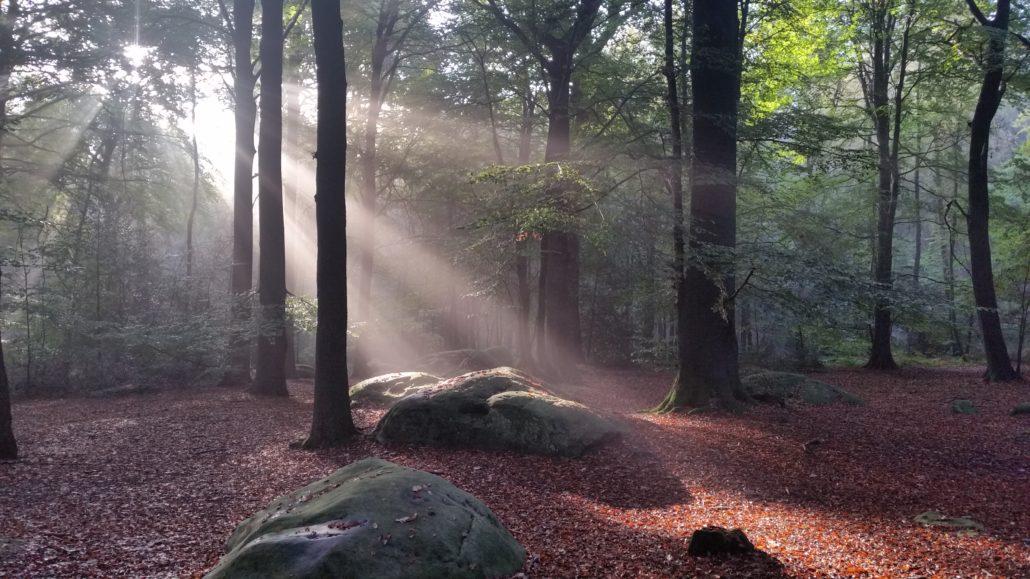 Saamsung-Waldfoto